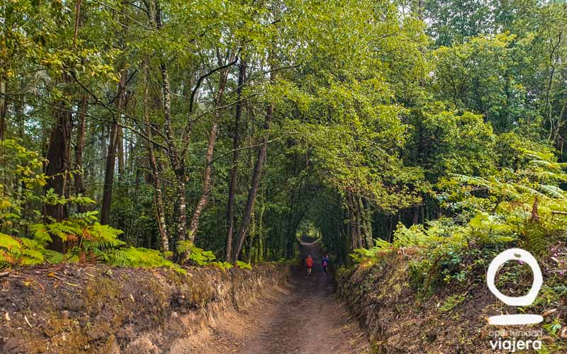 Guía Camino de Santiago
